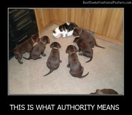 This Is What Authority Means Best Demotivational Posters