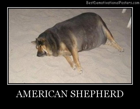 American Shepherd Best Demotivational Posters
