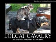 Lolcat Cavalry