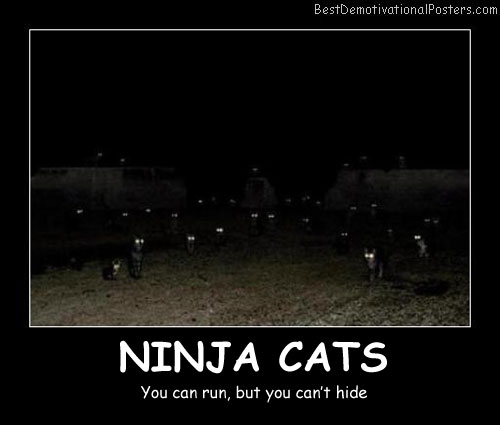 Ninja Cats Best Demotivational Posters