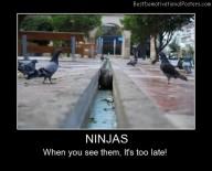 Ninjas Cats