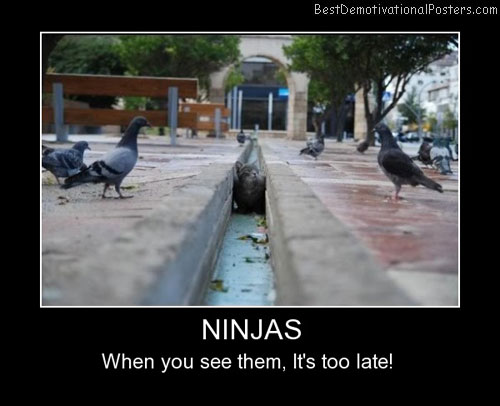 Ninjas Cats Best Demotivational Posters