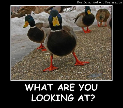 What Are You Looking At Best Demotivational Posters