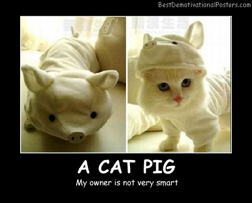 A Cat Pig Best Demotivational Posters