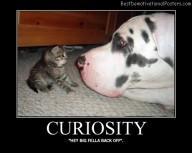 Pussycat Curiosity