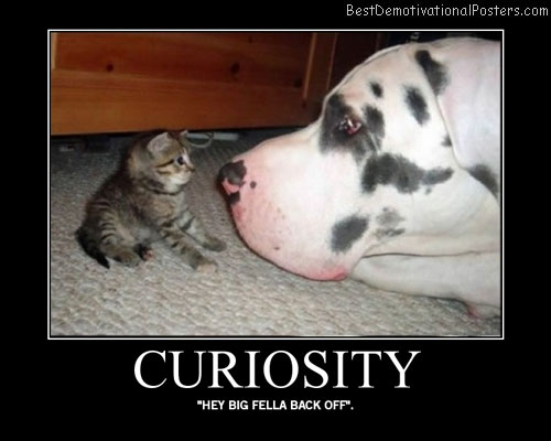 Curiosity Best Demotivational Posters