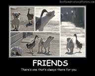 Friends Animals