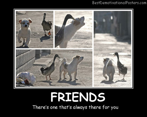 Friends Animals Best Demotivational Posters