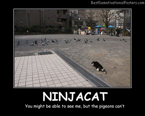 Ninjacat Best Demotivational Posters