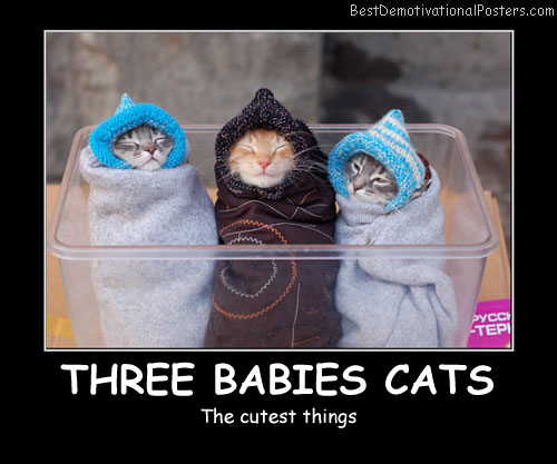 Three Babies Cats Best Demotivational Posters