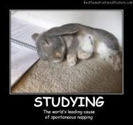 Studying Bunny