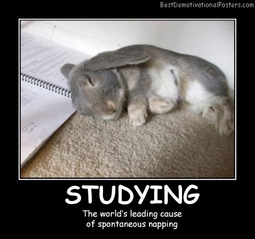Studying Bunny Best Demotivational Posters