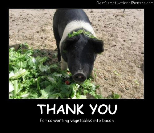 Funny Pig Demotivational Posters
