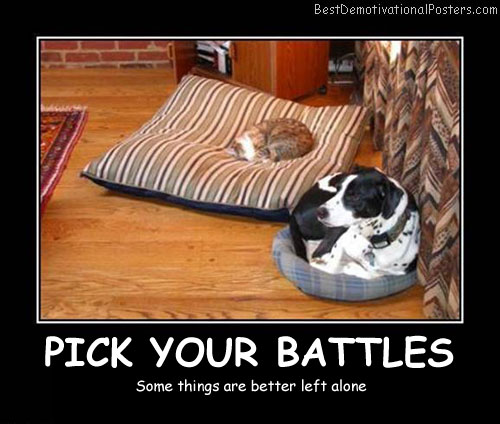 Cat and dog on pillows  Demotivational Poster