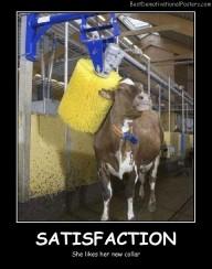 Cow Satisfaction Best Demotivational Posters