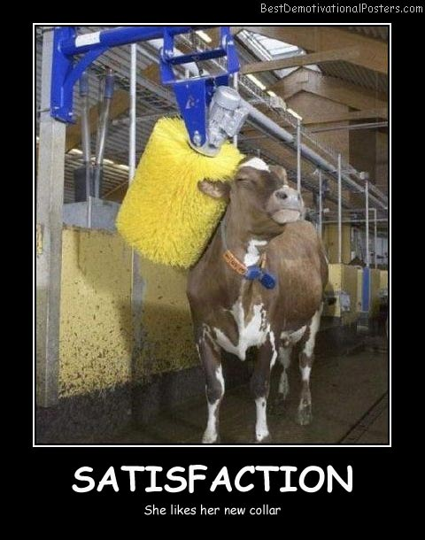 Cow Satisfaction Best Demotivational Posters