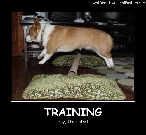 Training a dog best demotivational posters