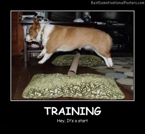 Positive Motivation Dog Training