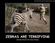 Zebras Are Terrifying