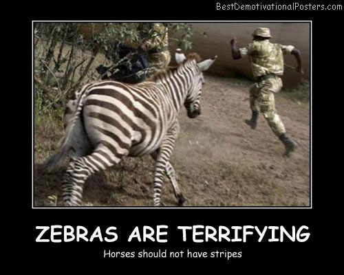 Zebras Are Terrifying Best Demotivational Posters