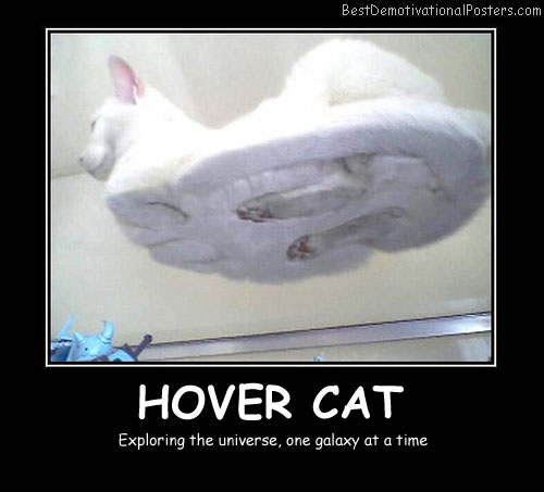 Hover Cat Best Demotivational Posters