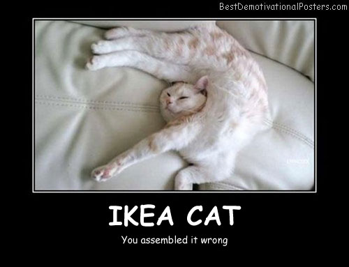 Ikea Cat Best Demotivational Posters