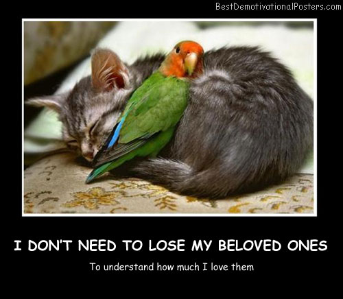 I Don't Need To Lose My Beloved Ones Best Demotivational Posters