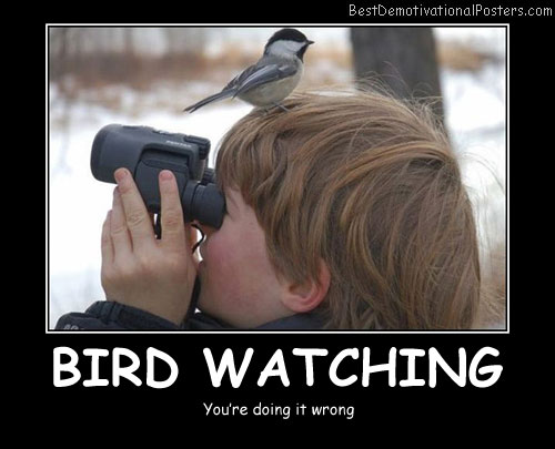 Bird Watching Best Demotivational Posters