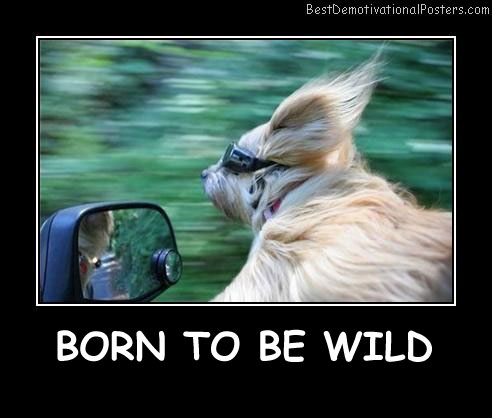 Born To Be Wild Best Demotivational Posters