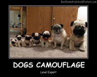 Dogs Camouflage