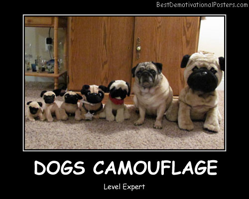 Dogs Camouflage Best Demotivational Posters