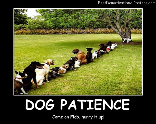 Dogs Patience funny Best Demotivational Posters