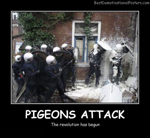 Pigeons Attack Best Demotivational Posters