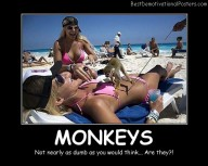 Smart Monkeys Best Demotivational Posters