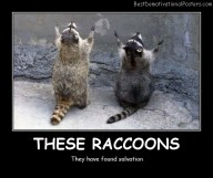 These Raccoons