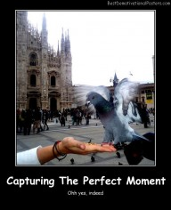 Capturing The Perfect Moment
