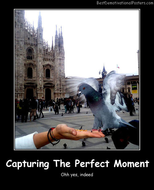 Capturing The Perfect Moment Best Demotivational Posters