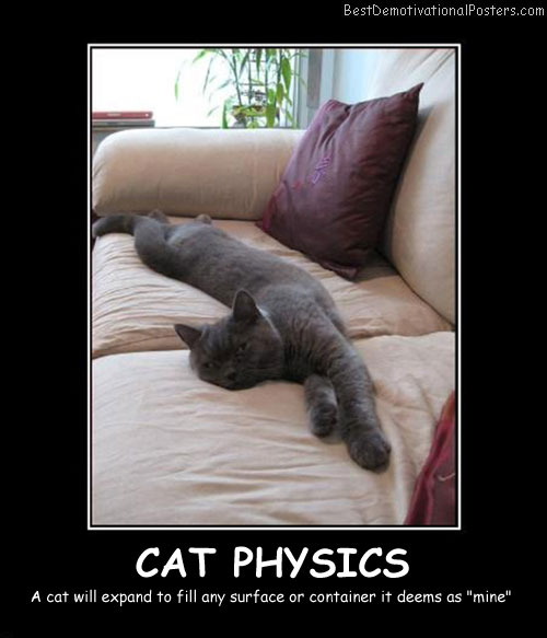 Cat Physics Best Demotivational Posters