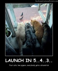 Four Cats Two Pigeons Best Demotivational Posters