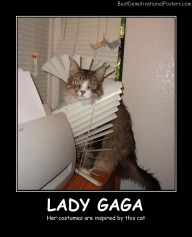 Lady Gaga Cat Best Demotivational Posters
