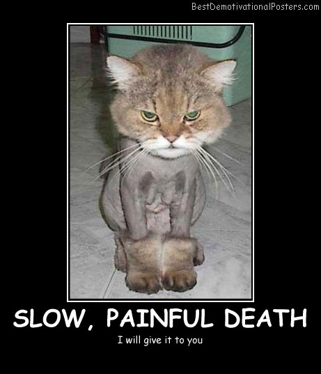 Slow Painful Death Best Demotivational Posters