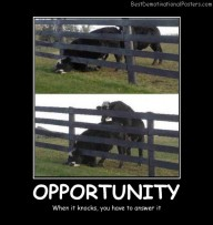 Opportunity When It