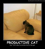 Productive Cat Best Demotivational Posters