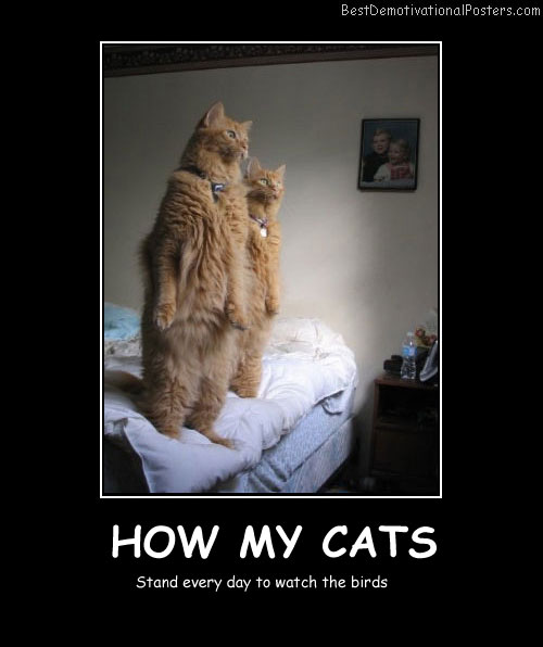 How My Cats-Best Demotivational Posters