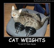 Cat Weights
