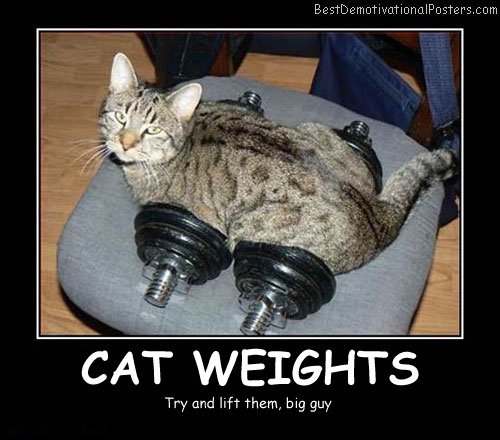 Cat Weights - Best Demotivational Posters