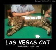 Las Vegas Cat