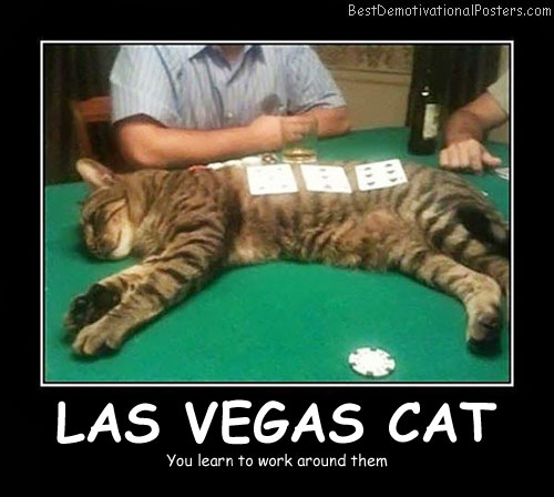 Las Vegas Cat - Best Demotivational Posters