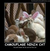 Camouflage Ninja Cat