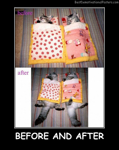 Cats before and after - Best Demotivational Posters